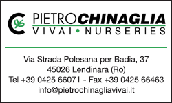 Pietro Chinaglia Vivai Nurseries