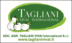 Tagliani Vivai International S.r.l.